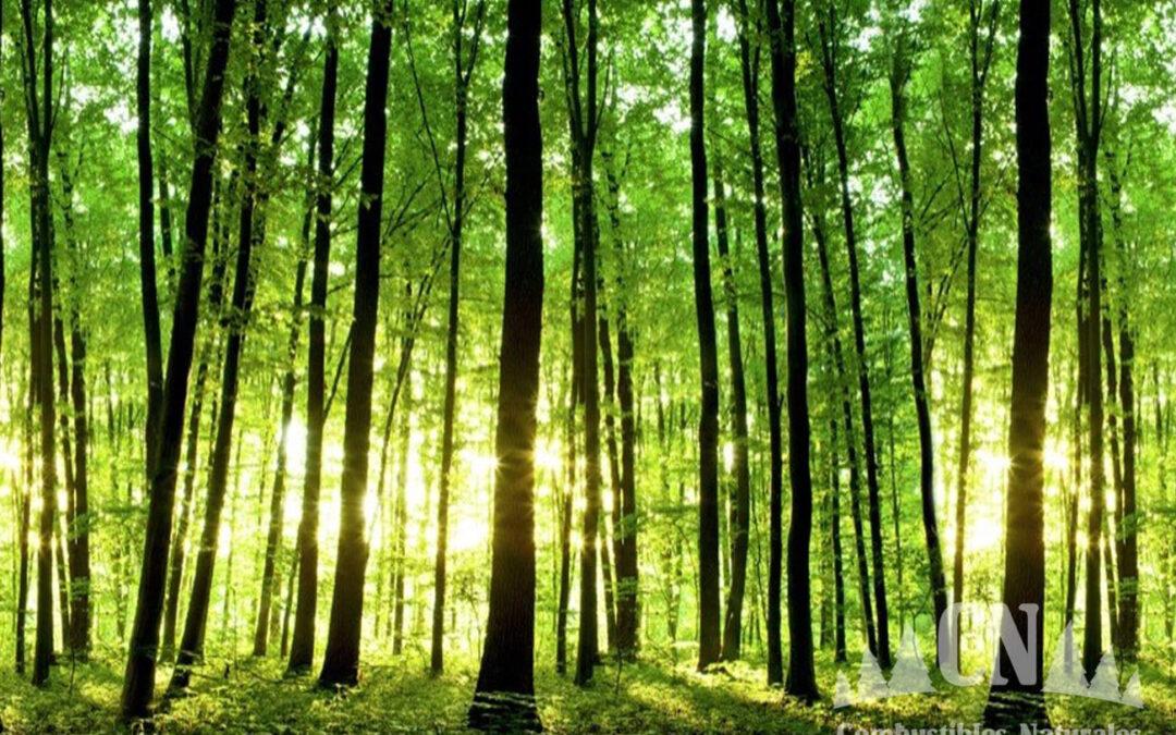 """""""Combustibles Naturales"""":  Comprometidos con la naturaleza y con las personas"""